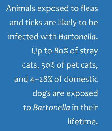 From Cat Scratch Disease to Bartonellosis