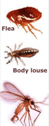Suspected Insect and Arthropod Vectors for Bartonella species